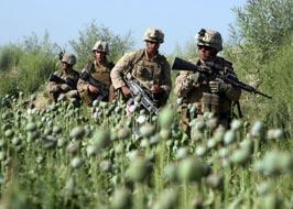 Афганистан - это плантации наркотиков