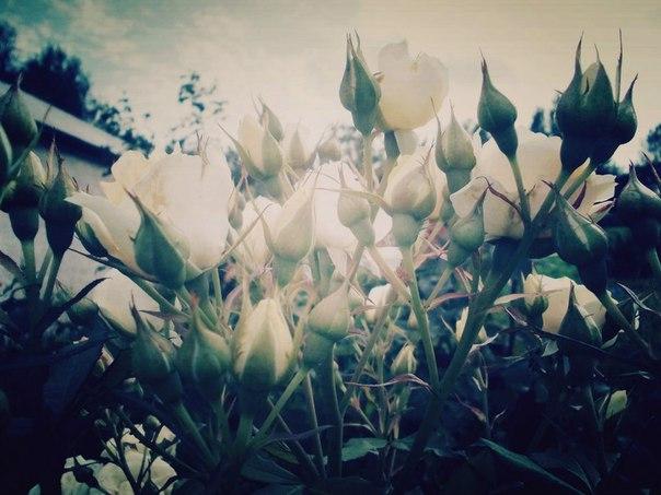 Можно ли дарить сорванные цветы?