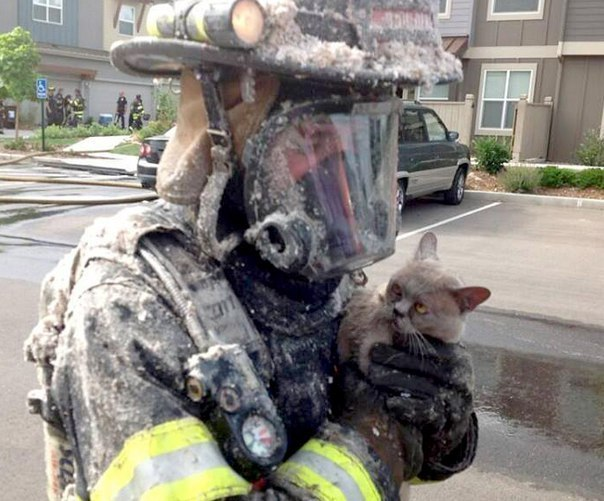 Пожарный спас кота от пожара